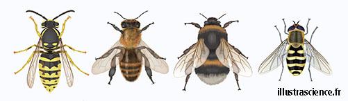 reconnaitre abeilles